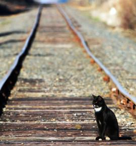 Column Nick: Huisdieren op de trein