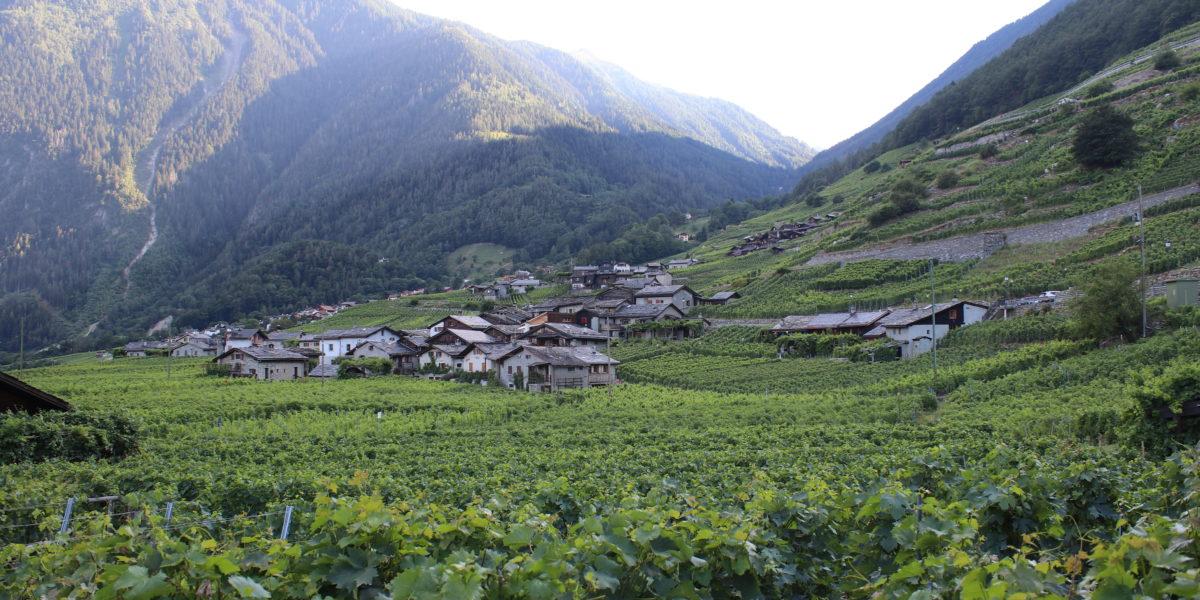 Treingids: Zwitserland (Wallis)